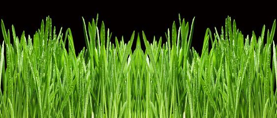 Obraz Wiosenna trawa - fototapety do salonu