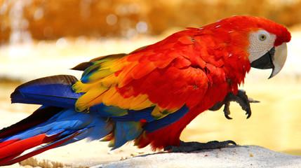 Un perroquet multicolore