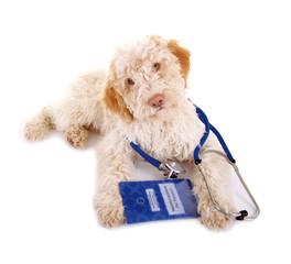 Tierarzt – Hund