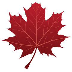 vector red maple leaf silhouette