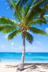 Wall Mural - Coconut Palm tree on the sandy beach in Hawaii