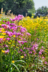 Fototapete - Field of beautiful flowers and grass.