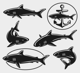Shark set. Vector