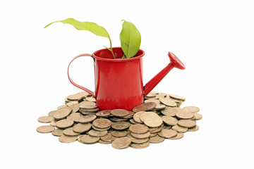 Idea of savings and money tree, isolated on white