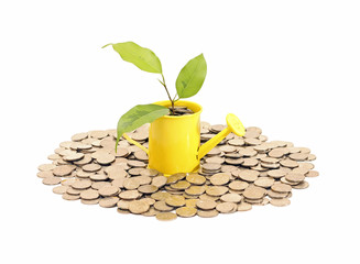 Concept of savings and money tree