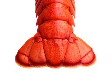 Zelfklevend Fotobehang Schaaldieren Lobster tail