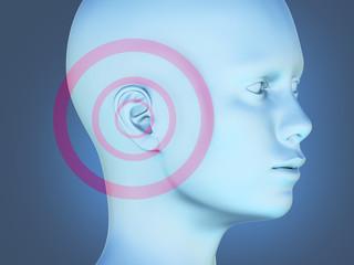 organ of hearing