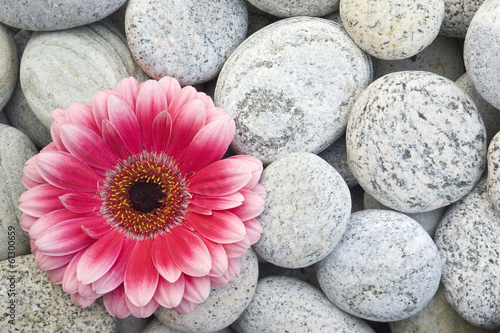damion flower - HD2560×1600