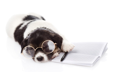 sleeping puppy with pen and notebook. isolated on white