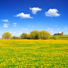 Spring landscape with dandelions on meadow.