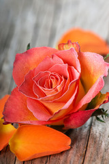 Gefrostete Rose