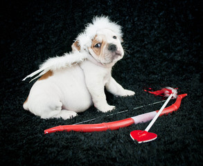 Cupid Puppy