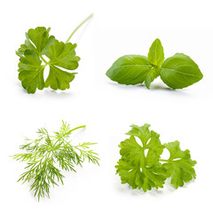 Herbs set on white background. Fresh parsley, basil and dill