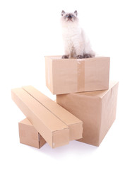 Beautiful cat with boxes isolated on white