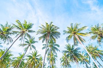 coconut  bright blue