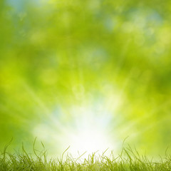 Spring Grass Background