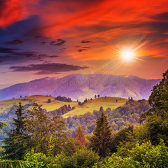 coniferous forest on a steep mountain slope at sunset