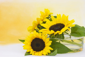 sunflowers in glass vase (Helianthus)