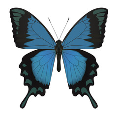 Butterfly isolated on white. Vector Illustration