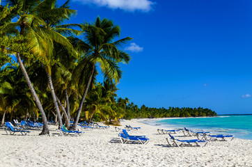 Exotic vacation in Dominican Republic. Palm trees, beach chairs