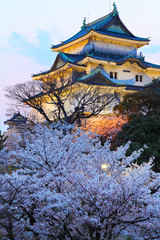 Wakayama Castle with sakura at night