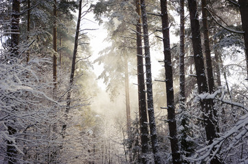 A snowy forest, with snow falling down from the trees and rays o