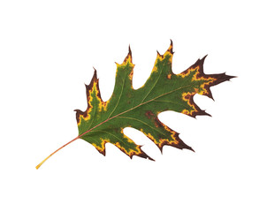 One autumn leaf