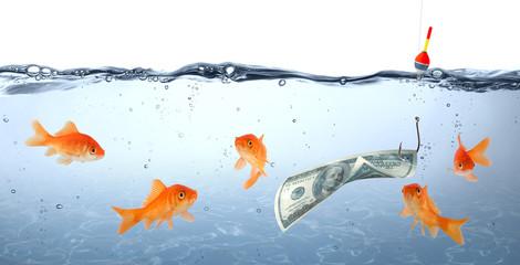 goldfish in danger - dollar as bait - concept deception