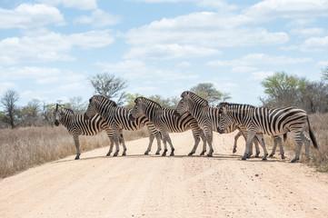 Staande foto Zuid Afrika Zebra crossing road, Kruger National Park, South Africa