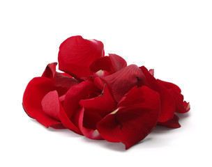 Rose petals isolated on white background.