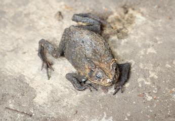 frozen frog dead