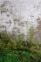 Wall Mural - Feuchter Sockelbereich einer Hauswand