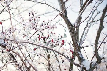 Ice Branches with Briar