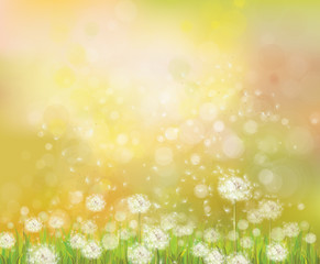 Vector sunshine  background with white dandelions.