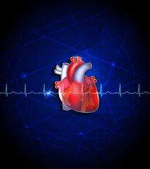 Heart anatomy on a deep blue background