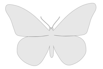 cartoon image of buttefly animal