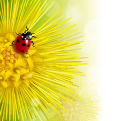 floral background with a coltsfoot and ladybug