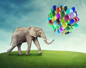 Fototapete - Elephant with balloons