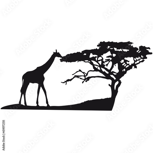 Afrika baum giraffe landschaft fressen savanne stockfotos und lizenzfreie bilder auf fotolia - Wandtattoos afrika style ...
