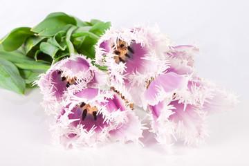 decorative flowers tulips