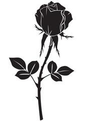 Silhouette rose
