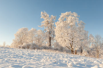 Trees in the field in the winter.