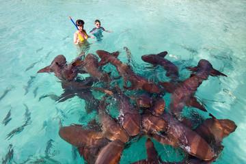 Fototapete - Swimming with nurse sharks
