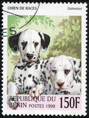 stamp printed in Benin showing dalmatien dog