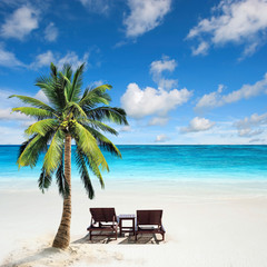 Relaxing under a palm tree on remote beach.