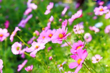 beautiful blossom spring