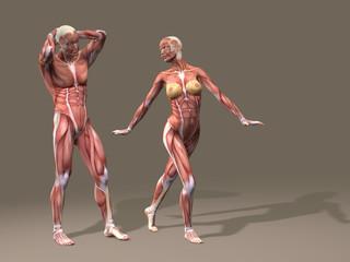 Human man and woman anatomy