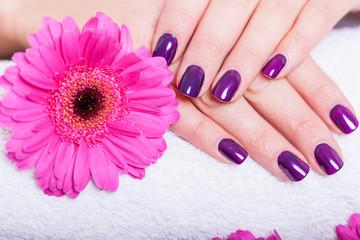 Frau mit manikürten Händen und Gerbera Blüten in einem Nagels