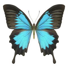 Schmetterling hellblau