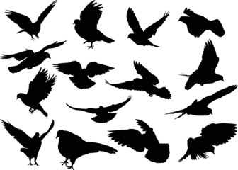 fifteen dove silhouettes isolated on white